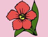 Desenho Flor 4a pintado por luzinda