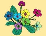 Desenho Primula pintado por luzinda