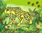 Um guepardo