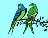 Par de pássaros