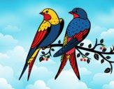 Desenho Par de pássaros pintado por Andreamarc