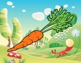Cenoura ecológica