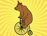 Urso em uma bicicleta