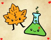 Curso de ciências