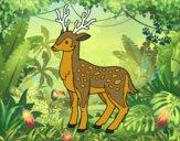 Desenho Un cervo novo pintado por amabapo