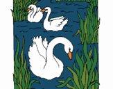 Desenho Cisnes pintado por Craudia