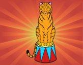 Desenho Tigre do circo pintado por ThaySilvaa