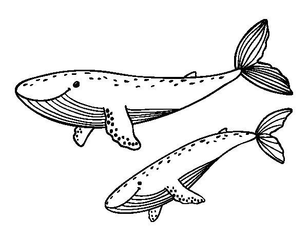 Desenho de Baleias para Colorir
