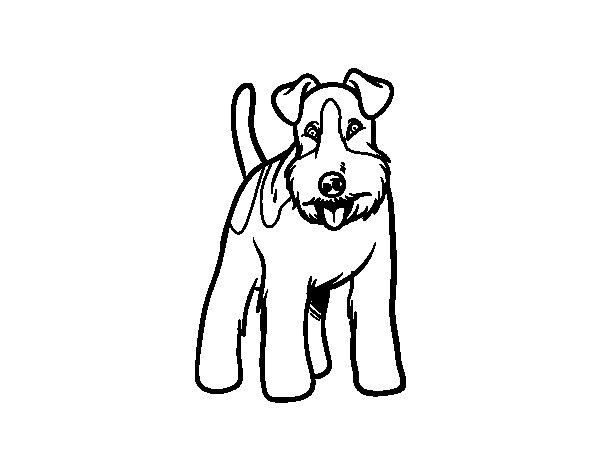 Desenho de Cão Fox Terrier para Colorir