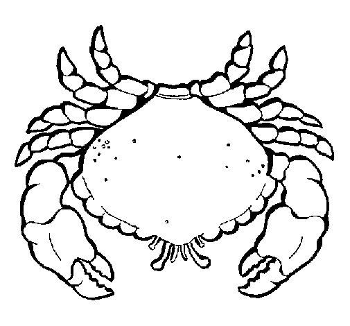 Desenho de Caranguejo grande para Colorir