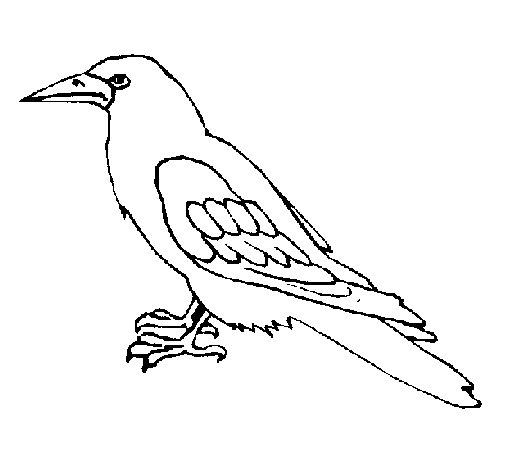 Desenho de Corvo para Colorir