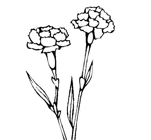 Desenho de Cravos para Colorir
