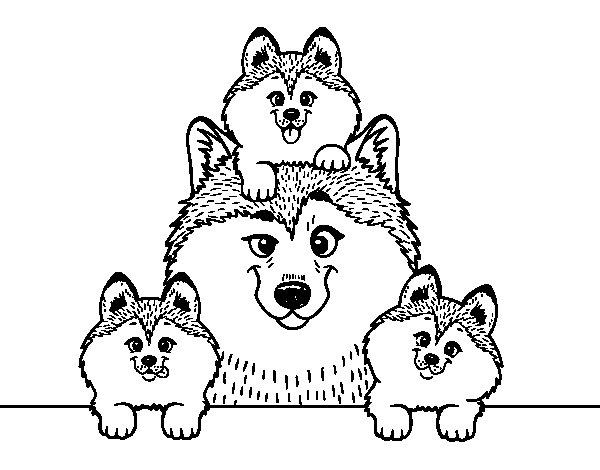 Desenho de Familia Husky para Colorir