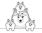 Desenho de Familia Husky para colorear
