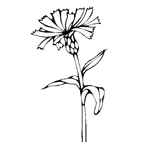 Desenho de Flor 6 para Colorir