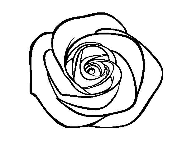 Desenho de Flor de rosa para Colorir