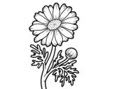 Desenho de Margarida selvagem para colorear