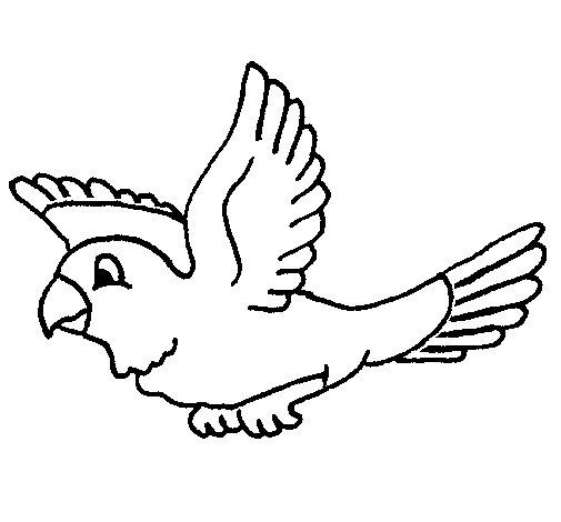 Desenho de Periquito para Colorir