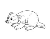 Desenho de Texugo ibérica para colorear