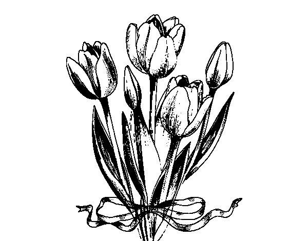 Desenho de Tulipas com um laço para Colorir