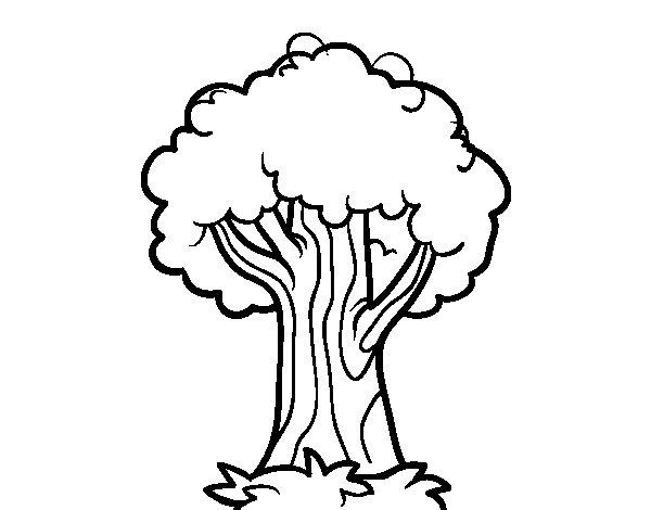 Desenho de Um carvalho para Colorir