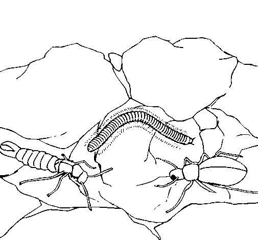 Desenho de Vários insectos para Colorir