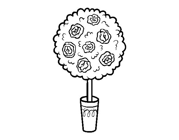 Desenho De Arbusto Para Colorir