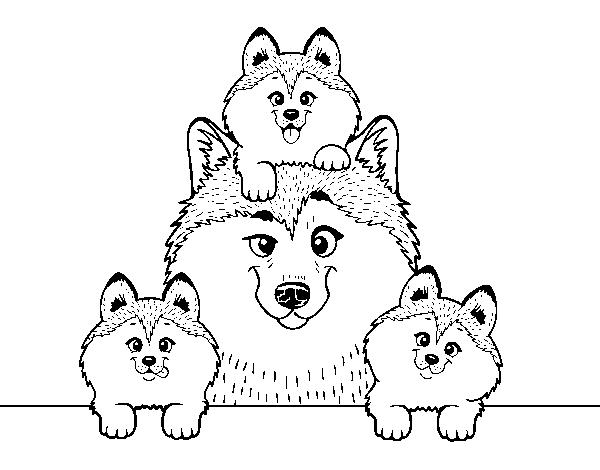 Desenho de Familia Husky para Colorir - Colorir.com