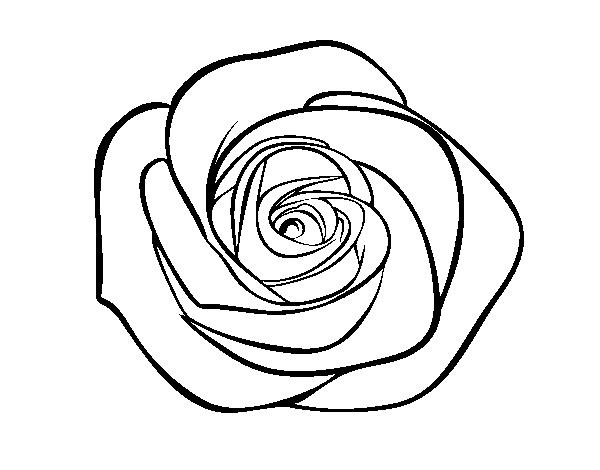 desenho de flor de rosa para colorir colorir com