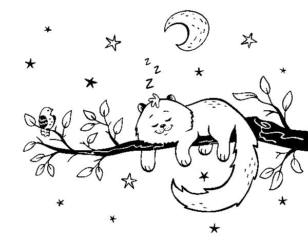 Desenho De O Gato Ea Luna Para Colorir